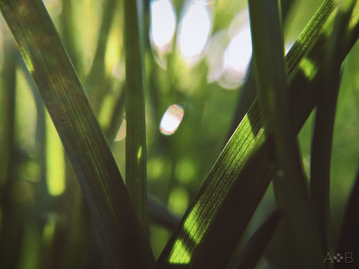 Grass Forest Plant Growth Grass No People EyeEm Best Shots EyeEm EyeEm Nature Lover Nature Nature_collection Nature Photography Naturelovers Beauty In Nature Outdoors Leaf Blade Of Grass Sunlight OpenEdit Photooftheday Colorful Purity Tranquility Focus On Foreground Day Green Color Plant Part