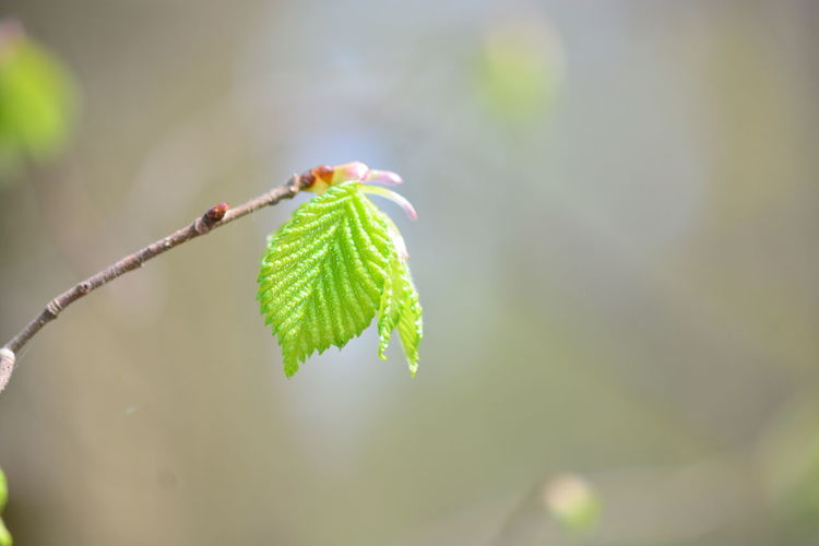 Leaf Plant Part Green Color Plant Close-up Growth Focus On Foreground Beauty In Nature Day Nature No People Fragility Vulnerability  Outdoors Beginnings Selective Focus Plant Stem Bud New Life Animal Wildlife Leaves