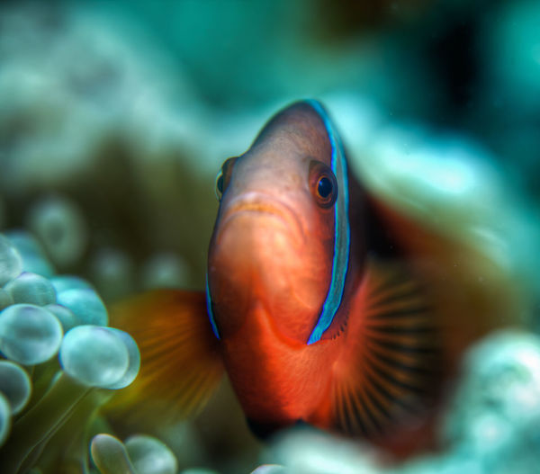 Animal Body Part Animal Head  Aquarium Beauty In Nature Blue Close-up Focus On Foreground Multi Colored Nature No People Portrait Selective Focus