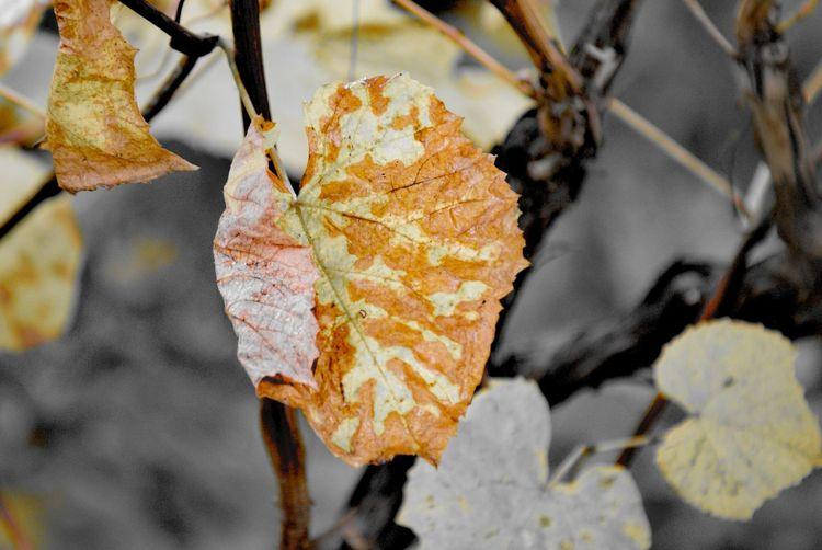 Tree Branch Leaf Autumn Change Plant Part Close-up Plant
