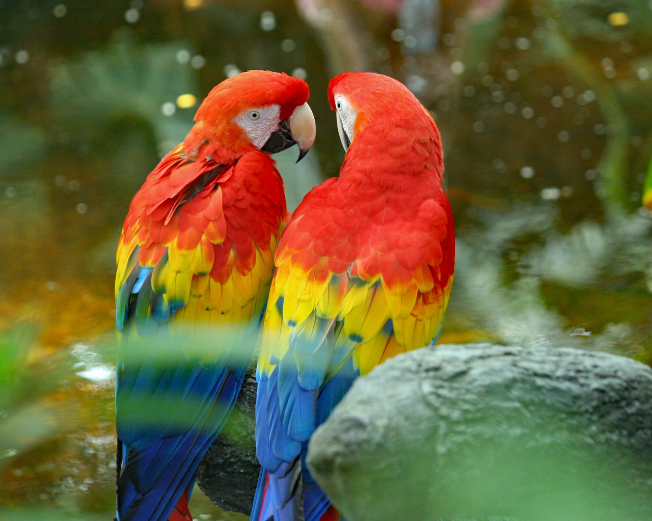 Close-Up Of Scarlet Macaws Perching On Rock