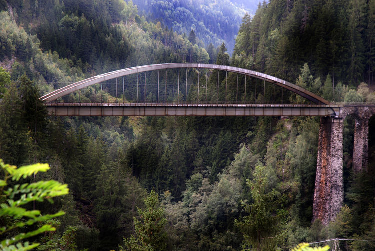 Arch bridge in forest