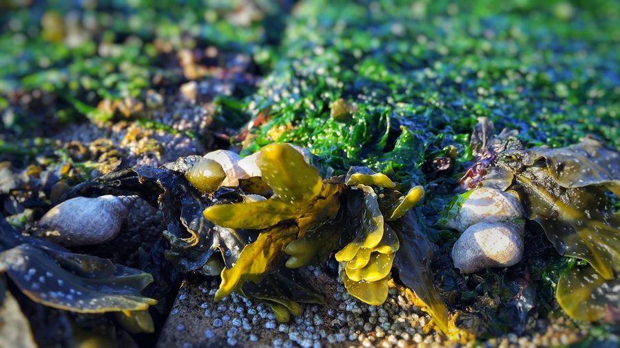 Close-up of seashells and seaweed on rock