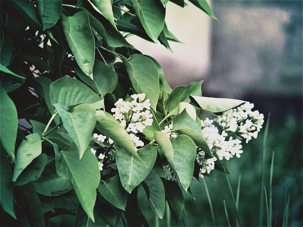 Leaf Flower Growth Plant Nature Petal Fragility Green Color Freshness Beauty In Nature Flower Head No People Close-up Outdoors Day Blooming Shushannaagapiphoto Shushannaagapi EyeEmNewHere