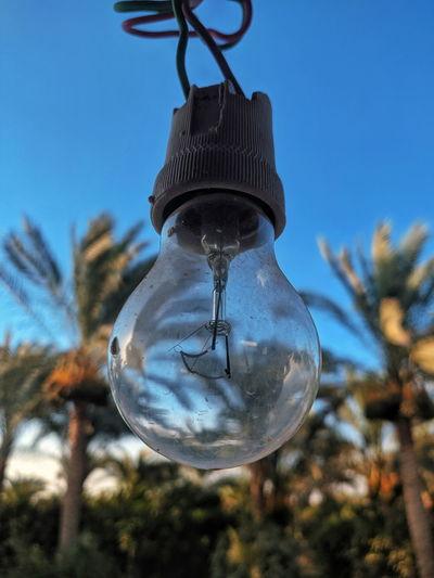 Nature Bulb ..