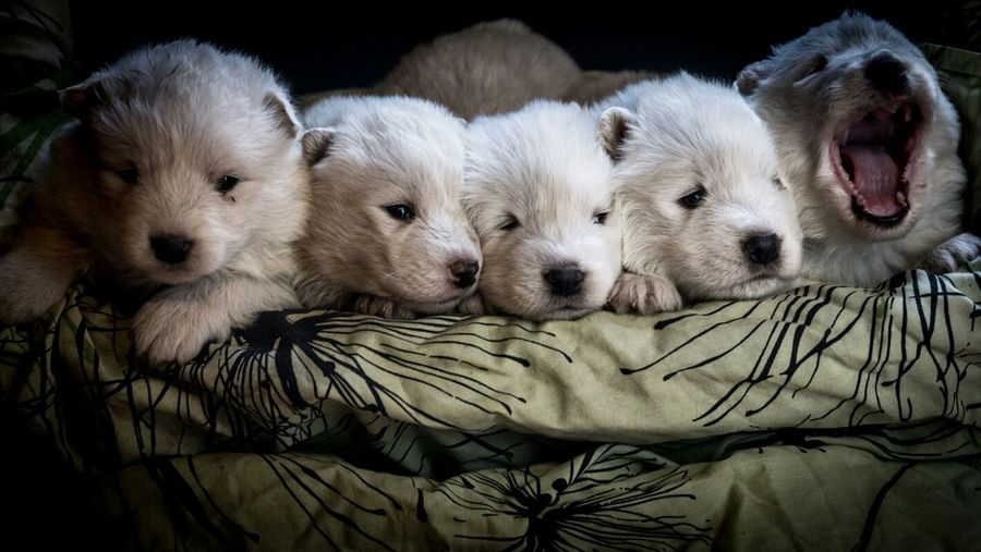 Close-up of relaxed puppies