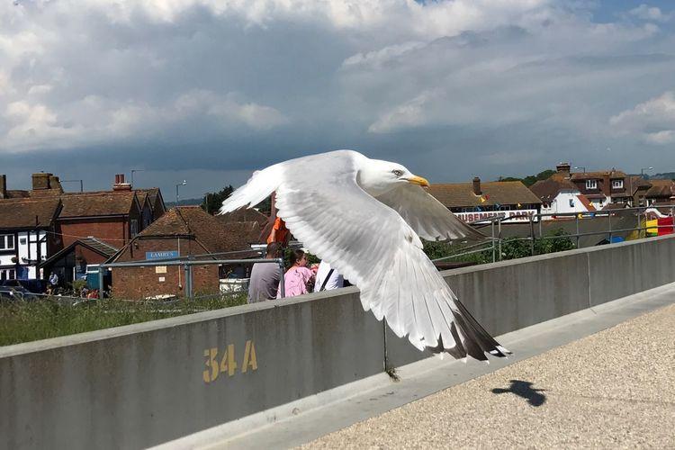 Seagull flying against the sky