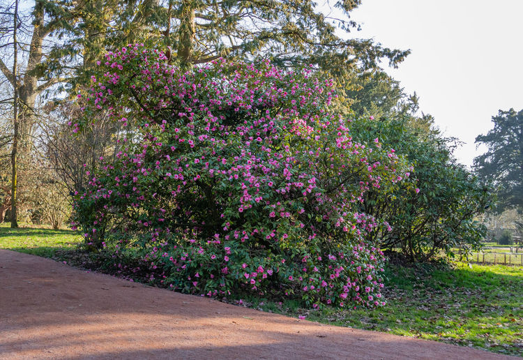 Tree Arboretum Westonbirt Arboretum Beauty In Nature Flowering Plant Tranquility Tranquil Scene No People Outdoors