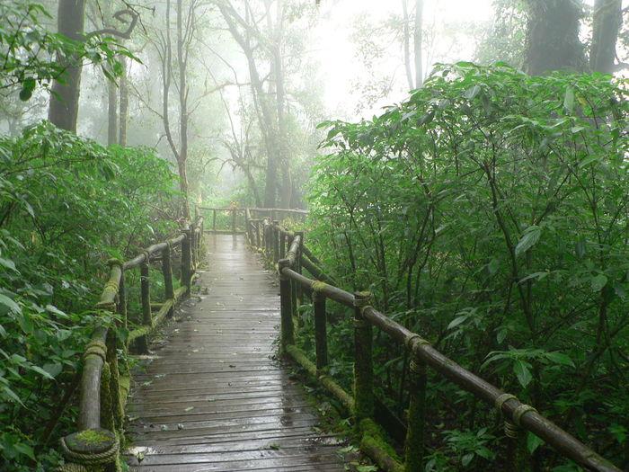 Narrow walkway along trees in park