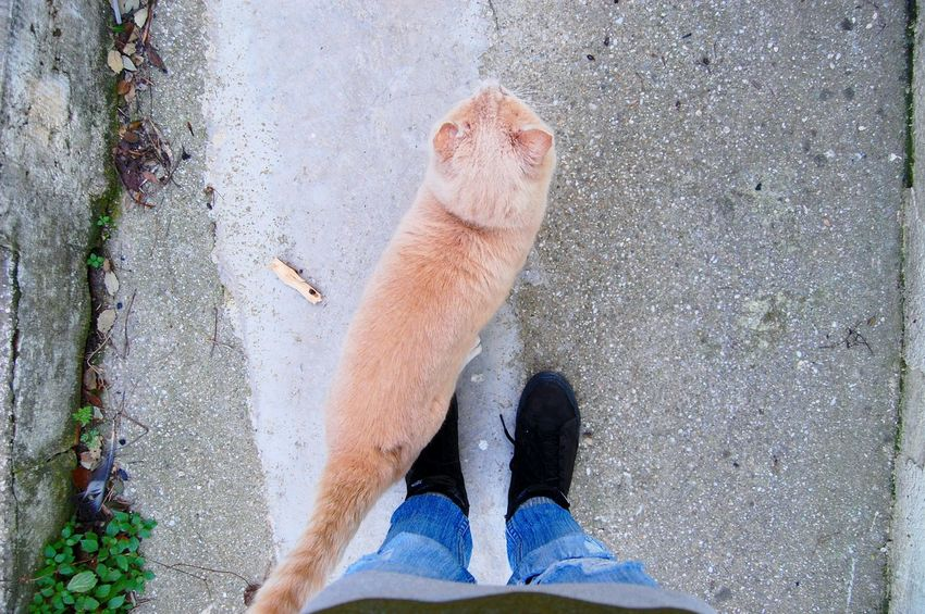 Animal Themes Mammal One Animal High Angle View Domestic Animals Day Shoe Pets Sand Low Section Outdoors Human Leg Nature Close-up Human Body Part One Man Only Chats Myvans Vans Vans Off The Wall Vansoffthewall Vans <3  Vans <3  Vansshoes vans swag Miles Away