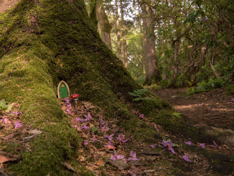 Beauty In Nature Clare Glens Fairy Fairy Door Fairytales & Dreams Flower Forest Green Color Growth Ireland Nature Nikon D3200 Outdoors Path Pink Color Scenics Tranquility Tree Tree Trunk Enchanted