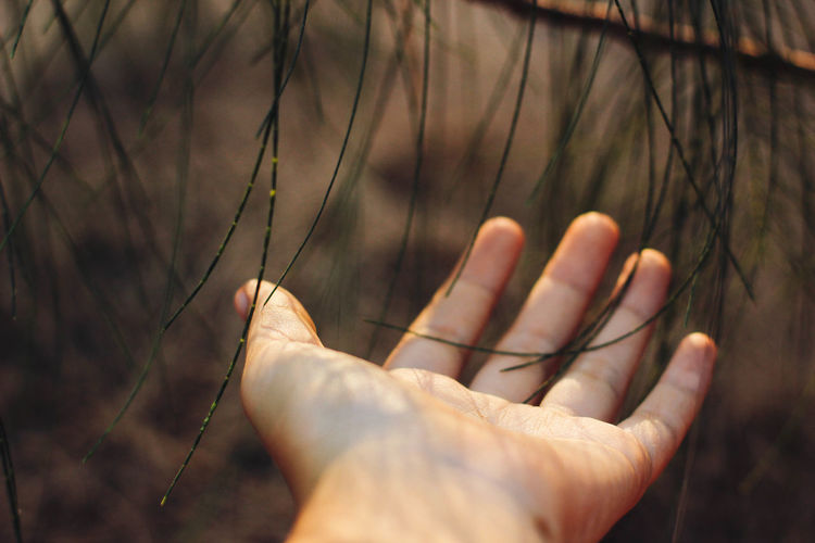 human woman hand touch the tree over the forrest Adult Close-up Day Focus On Foreground Human Body Part Human Hand Lifestyles One Person Outdoors Palm People Real People