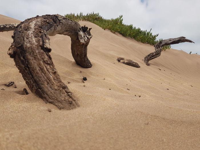 Driftwood on sand at beach against sky