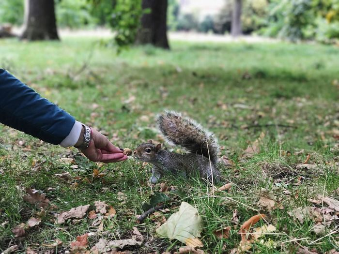 Close-up of hand holding squirrel on grass