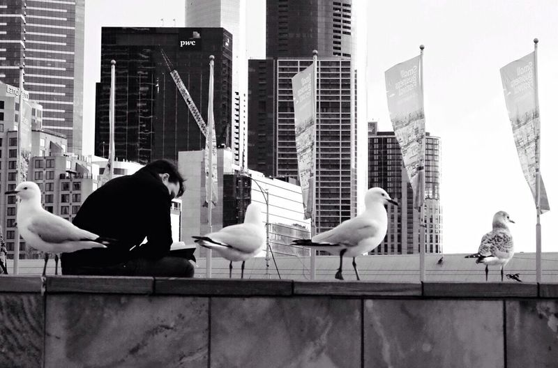 Queens in The city Seagull Streetphotography Urban Landscape City Life