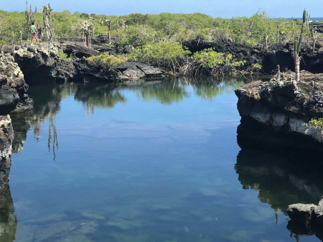 Los túneles Galapagos Los Tuneles Reflection Water Rock - Object Nature No People Day Outdoors Beauty In Nature Tranquil Scene Tranquility Scenics Plant Growth Tree Sky An Eye For Travel