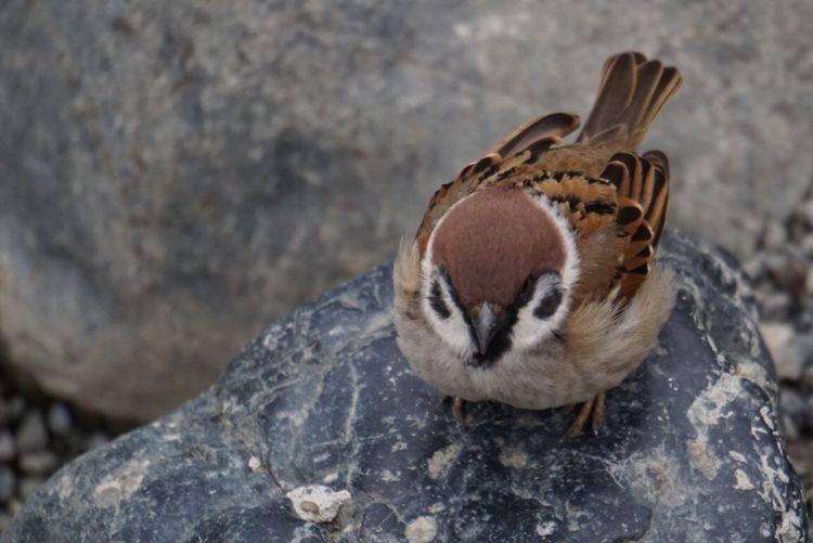 Little Bird Birds Bird Photography Bird Watching Animal Animals In The Wild Animal Photography