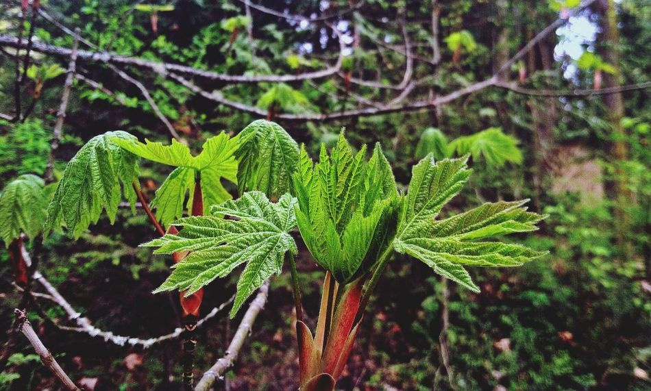 Nature_collection EyeEm Nature Lover EyeEm Best Shots - Macro / Up Close Nature
