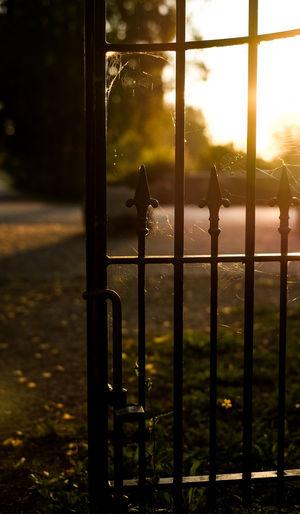 Fence Cobweb Detail Early Morning Fence Fujifilm_xseries Metal No People Rijsterbos Rijswijk Sunlight