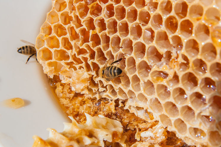 Animal Animal Themes Animal Wildlife Animals In The Wild APIculture Beauty In Nature Bee Beehive Close-up Food Food And Drink Group Of Animals Hexagon Honey Honey Bee Honeycomb Insect Invertebrate Nature No People