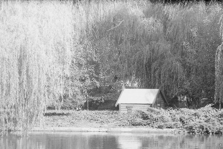 House (for a duck?) 35mm Film CHM Universal 100 Pentacon 2.8/135mm Beauty In Nature Black And White Film Photography House Water