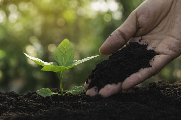 Seedling and plant growing in soil and copy space for insert text Human Hand Hand Growth Human Body Part One Person Plant Part Real People Leaf Dirt Nature Plant Holding Gardening Beginnings Focus On Foreground Green Color Day Lifestyles Food Planting Outdoors Finger Care