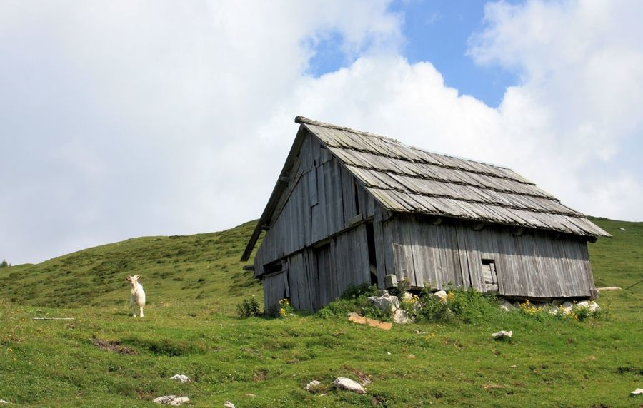 mountain hut and a goat in julian alps Slovenia Bohinj, Slovenia Goat Architecture Beauty In Nature Building Exterior Built Structure Cloud - Sky Day Domestic Animals Grass House Hut Mammal Mammals Mountain Nature One Animal Outdoors Sky Wooden