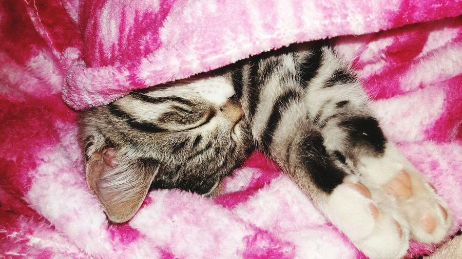 Pets Domestic Animals Cat Love First Eyeem Photo