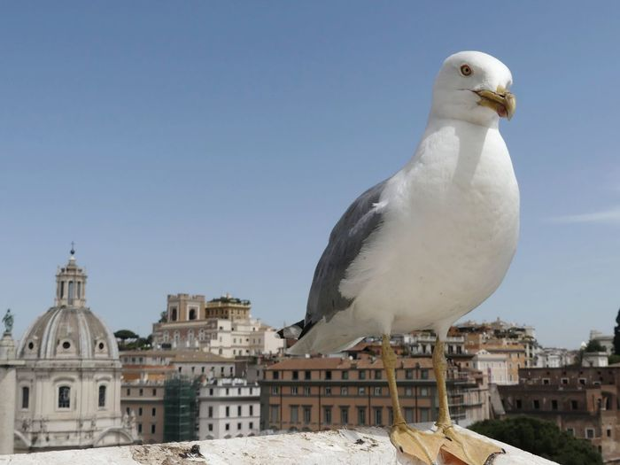 Seagull perching on a building