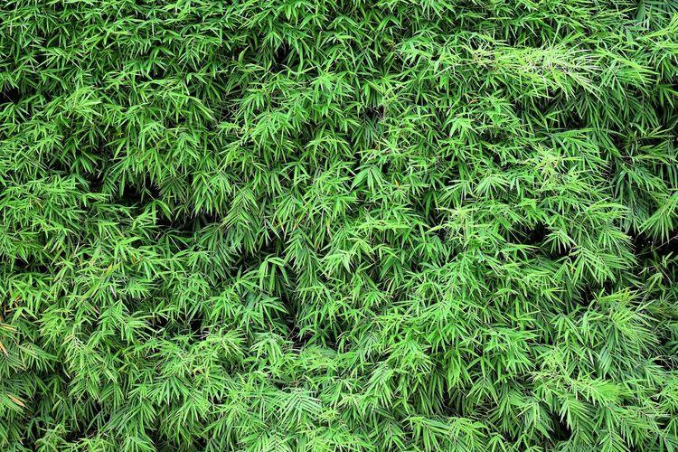 Full frame shot of plants on land