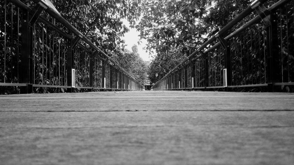 Canopy Walk Bridge Scenery Monochrome Garden Perspective Scene Distance Showcase March From My Point Of View Landscape With Whitewall