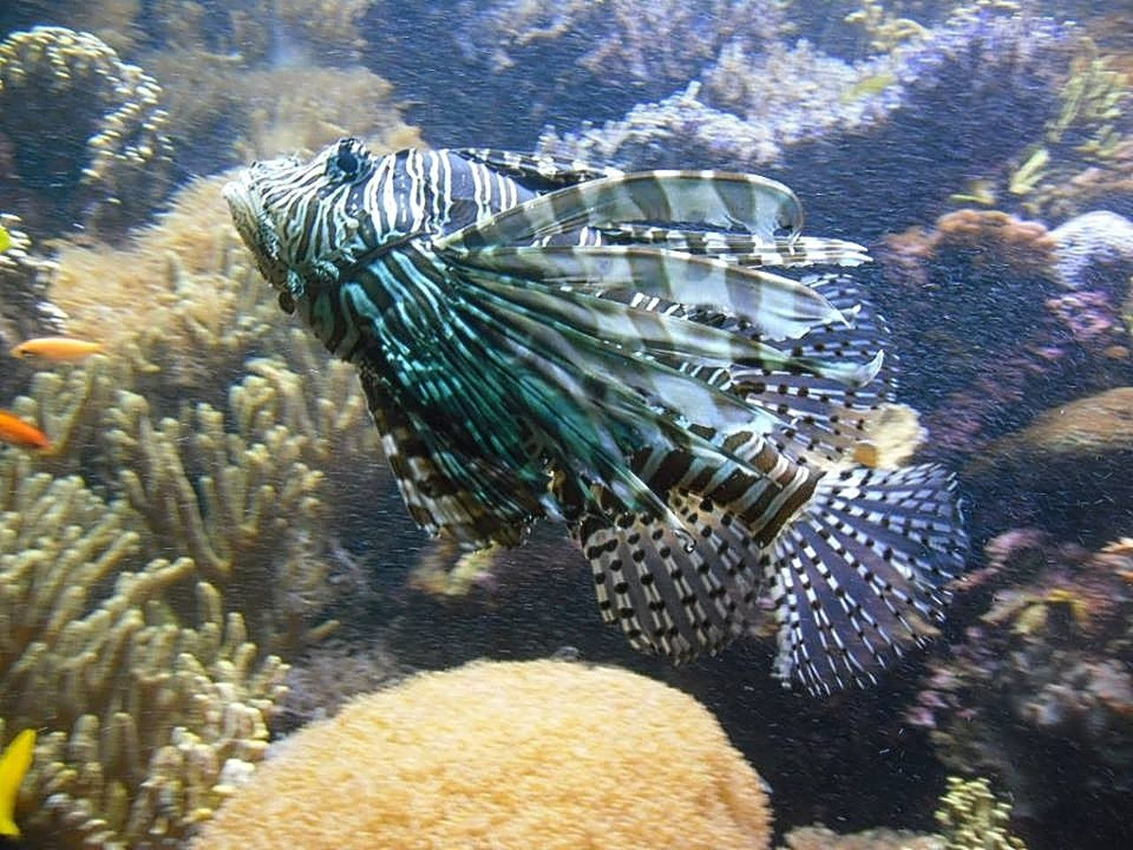 underwater, sea life, animal themes, animals in the wild, undersea, water, one animal, animal wildlife, no people, fish, swimming, sea, close-up, nature, coral, day, outdoors