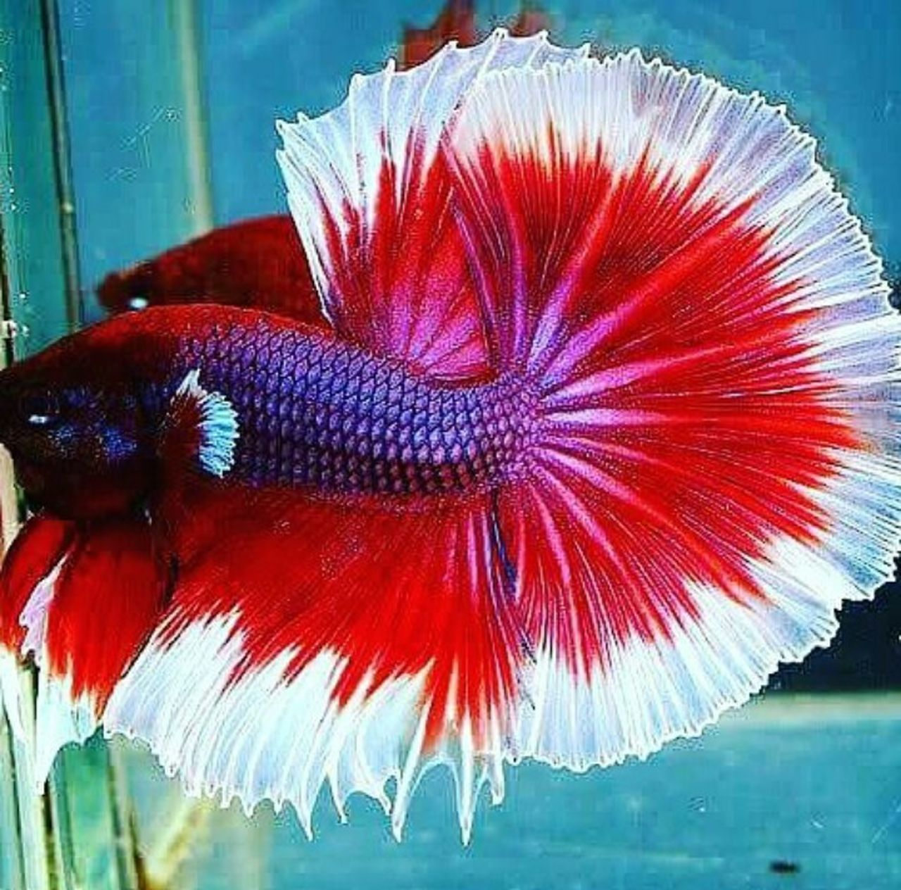 one animal, red, animal themes, no people, close-up, animal wildlife, animals in the wild, sea life, underwater, water, bird, indoors, nature, fragility, day, beauty in nature, undersea, freshness, flower head