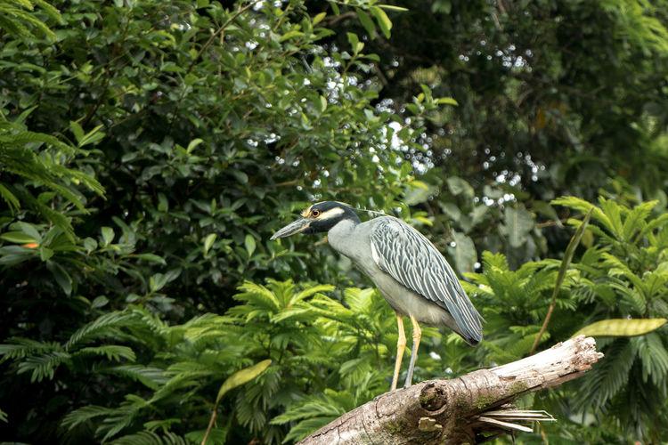 Costa Rica Animal Themes Animal Wildlife Animals In The Wild Bird No People One Animal Tortuguero