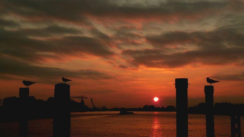 Sunset Silhouette Dramatic Sky Orange Color Sky Cloud - Sky