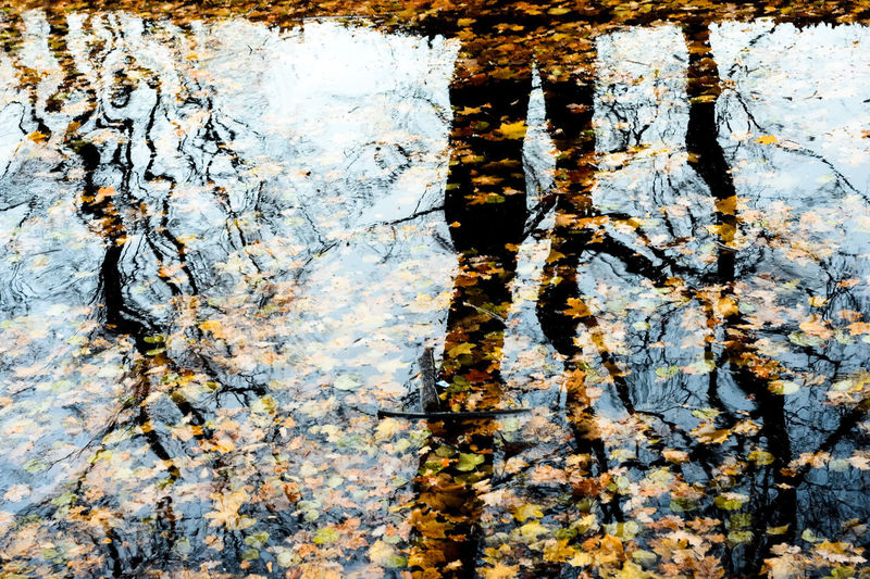 reflection of