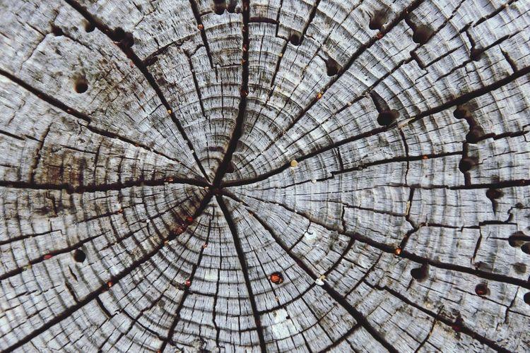Full frame shot of tree stump