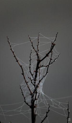 Thorny Devil Spider Web EyeEm Best Shots - Macro / Up Close EyeEm Best Shots - No Edit