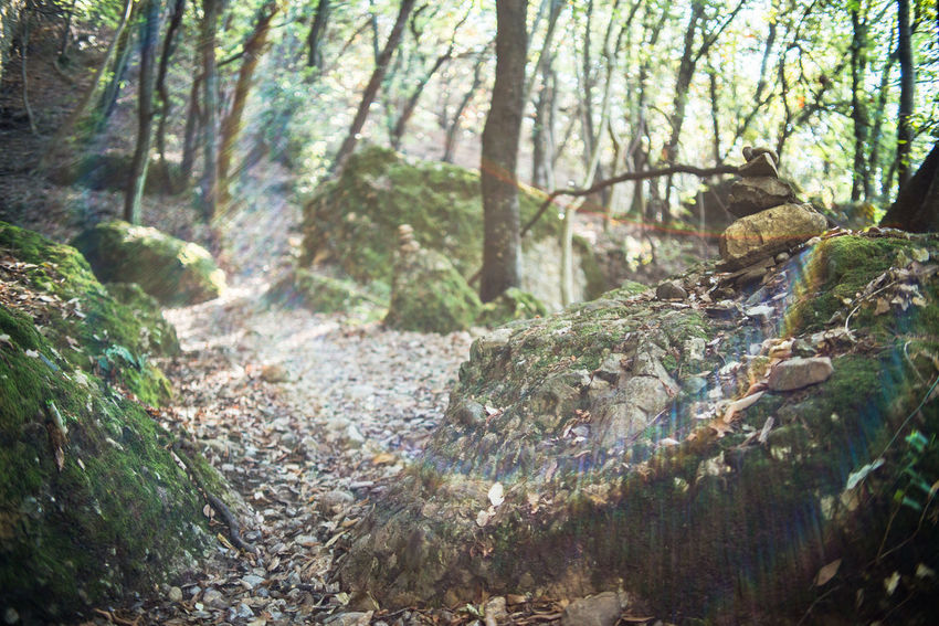 Autumn Dry Leaves Hiking Lichen Path Portofino Natural Regional Park Portofino Promontory Rock Formation Sunlight Trekking Adventure Beauty In Nature Day Forest Landscape Liguria Moss Nature No People Outdoors Stone Tourism Tree
