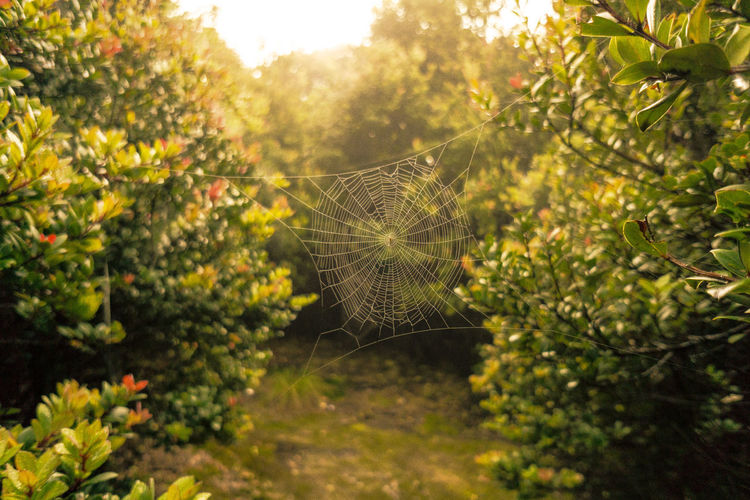 Close-up of spider web on plants