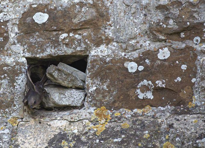 Full frame shot of old rock