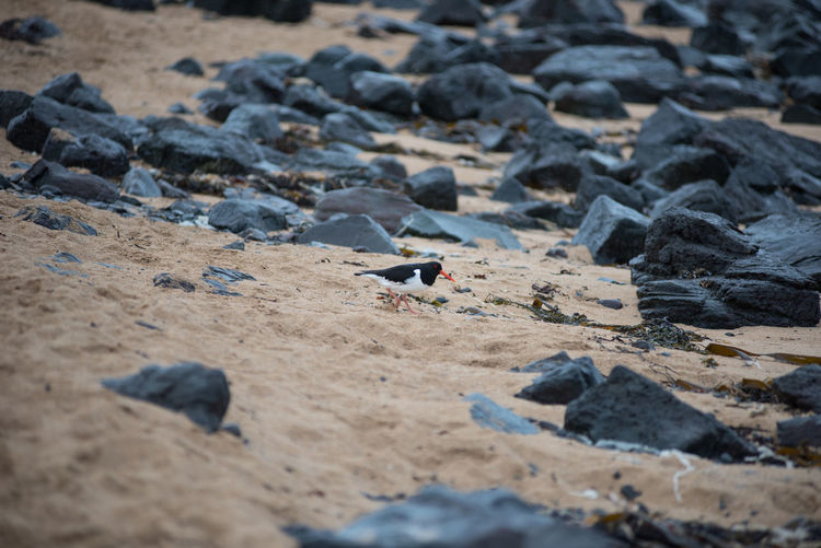 High angle view of bird on sand at beach
