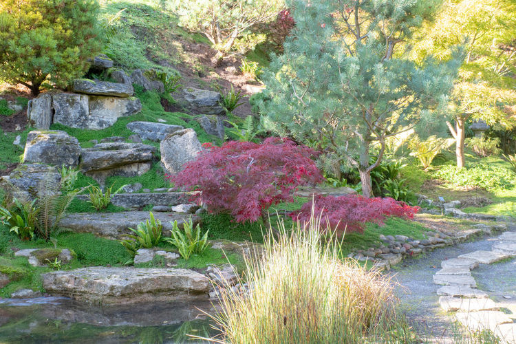 Japanese style garden located in England Plant Nature No People Beauty In Nature Ornamental Garden Formal Garden Tranquil Scene Tranquility Flower Garden Outdoors Japanese Style Japanese Style Garden