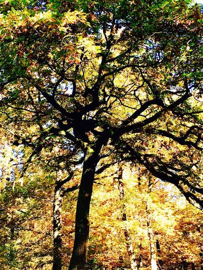 Nature Low Angle View Growth No People Nature Tree Low Angle View Beauty In Nature