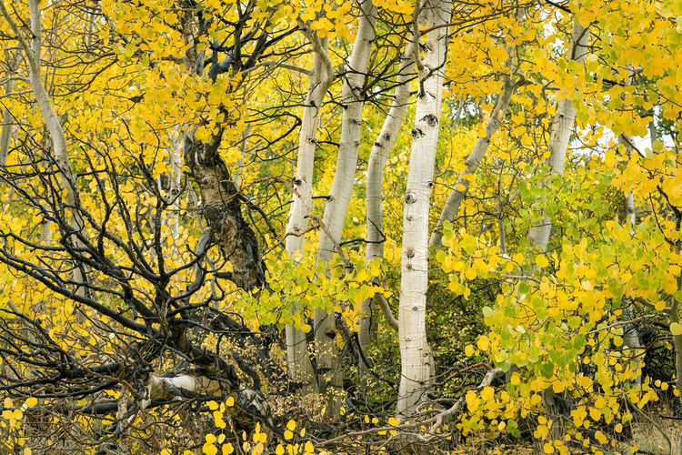 Yellow flowering trees in forest during autumn