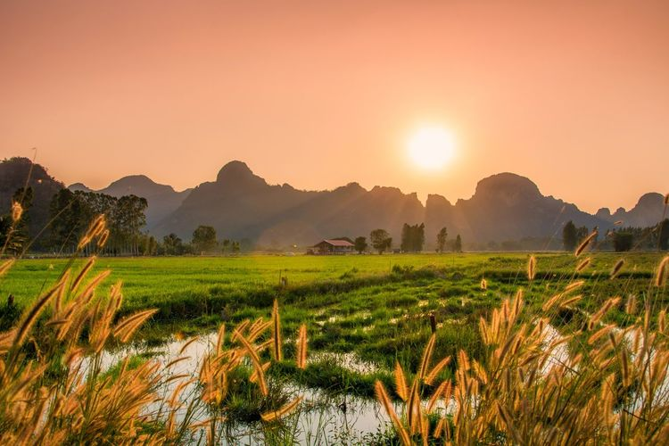 rice fields and sunset Sun Sunlight Grass Thailand Tree Rice Paddy Mountain Sunset Agriculture Cereal Plant Tea Crop Field Sky Landscape Rice - Cereal Plant Rice - Food Staple Fried Rice Farmland