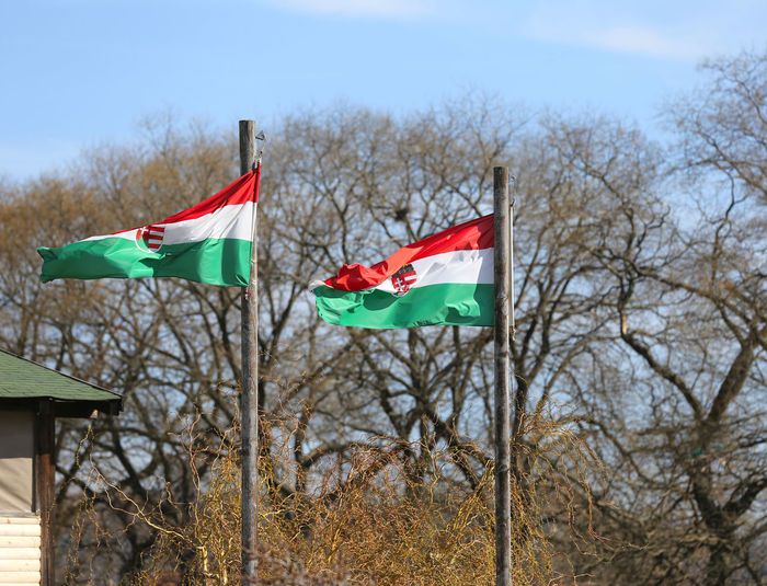 Low angle view of flags against bare trees