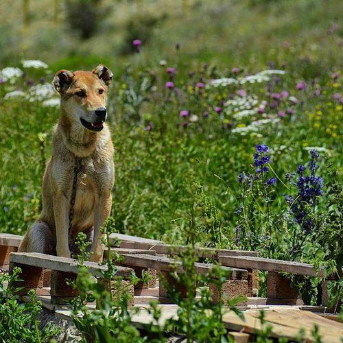 Nikon NikorVR Summer Andabil Khalkhal azerbaijan Dog dog landscape pic photographer photo arte_of_nature artist art arte akas_khoone