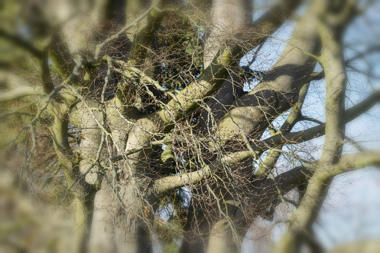 Old beech in the park in Lauenburg from the Elbe Selective Focus Close-up Nature Day Plant Tree Outdoors No People Old Nature Park Season  Beech Tree