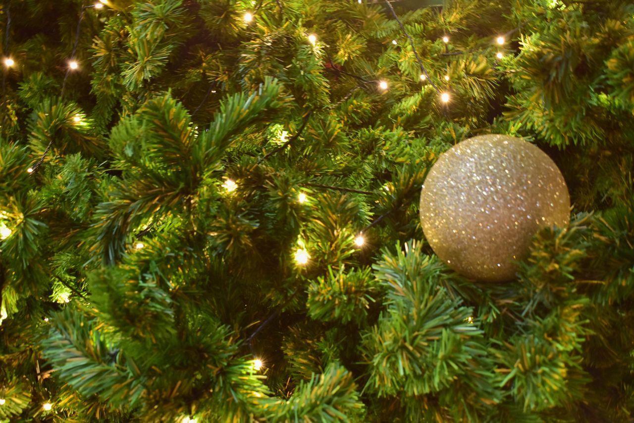 CLOSE-UP OF ILLUMINATED CHRISTMAS TREE IN PARK